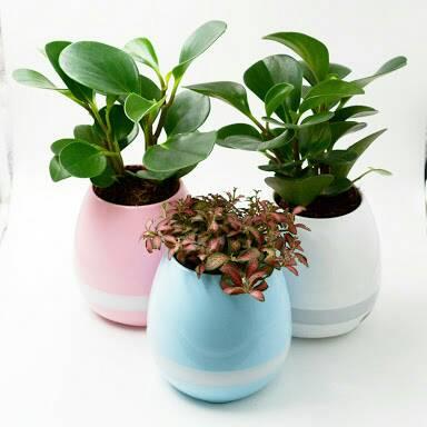 กระถางต้นไม้อัจฉริยะ (Smart Music Flower-pots)