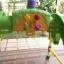 โมบาย Tomy Disney หมีพูห์ และเพื่อนๆ รหัสสินค้า : A0001 thumbnail 4