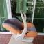 กระเช้าคาร์ซีท Leaman สีส้มเทา รหัสสินค้า CS0019 thumbnail 9