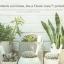 Xiaomi Flower Care Smart Monitor - เครื่องมือช่วยดูแลต้นไม้ (International Version) thumbnail 14