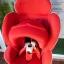 คาร์ซีทมือสอง Aprica Marshmallow สีแดง + หมวก รหัส CS0071 thumbnail 5